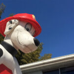 消防犬エアハウス 顔アップ